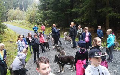 Von Huskys und Hotdogs – Wandertag 5b